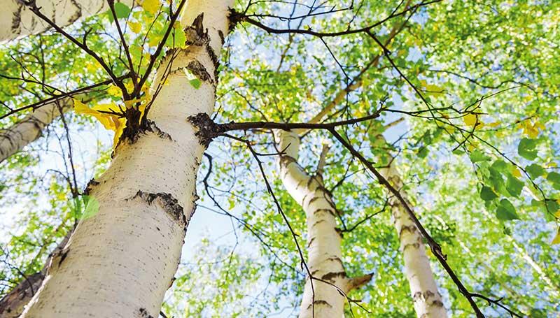 peitz-bauelemente-nachhaltigkeit-verantwortung